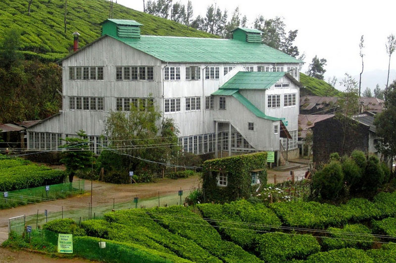 tea-factory in munnar